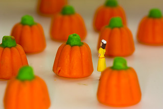 Day 299/365 - Picking the Perfect Pumpkin | by Great Beyond