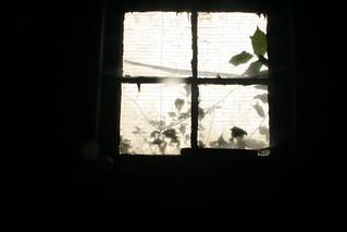 window   by Spacing Magazine