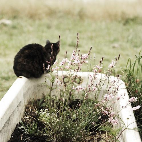 flowers film cat garden sophie cottage tortoiseshell hasselblad bathtub furryfriday portra 400nc thelittledoglaughed thecatwhoturnedonandoff cestnimportequoi