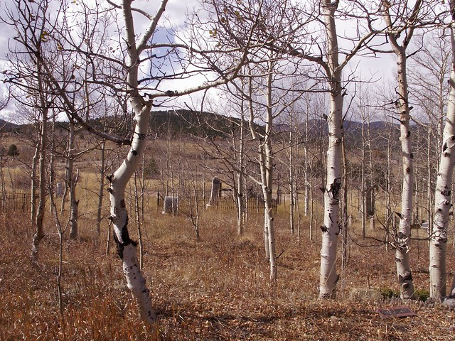 birch weeds