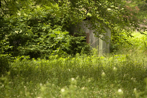 wood house grass landscape