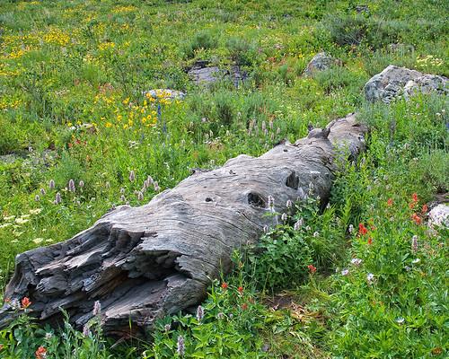 nature utah log nikon wildflowers wildflower d300 cachenationalforest cachecounty tonygrove natureselegantshots