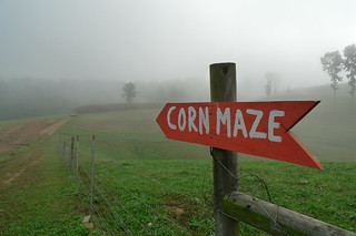 Corn maze in foggy morning | by dmott9