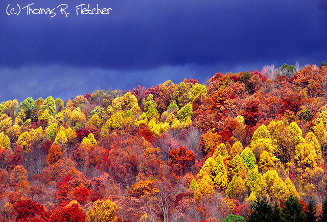 Webster County, Fall Color