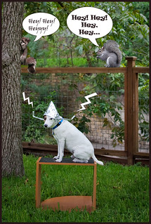 Donning his new squirrel decoder, Basil becomes the first canine on Earth to hear what chirping squirrels are actually saying.
