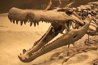 Dino alligator