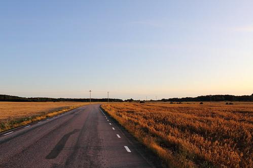 road summer field landscape scenery