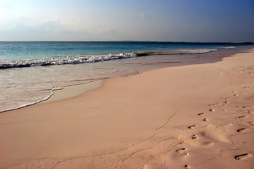 Pink Sands Beach , Harbour Island | by Mike's Birds
