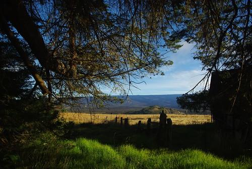 hawaii bigisland maunakea cindercone parkerranch forestandtrailstour