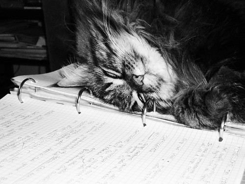 Isotta is sleeping on my notebook