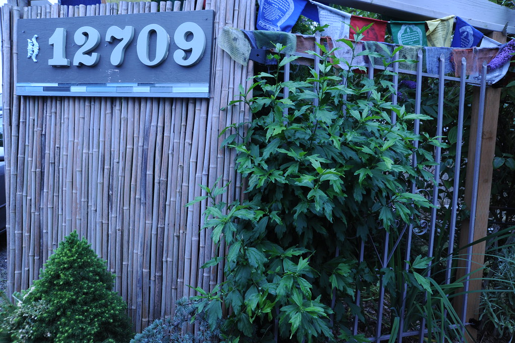 Address sign, 12709 1st ave NW, plants, Tibetan Buddhist p… | Flickr