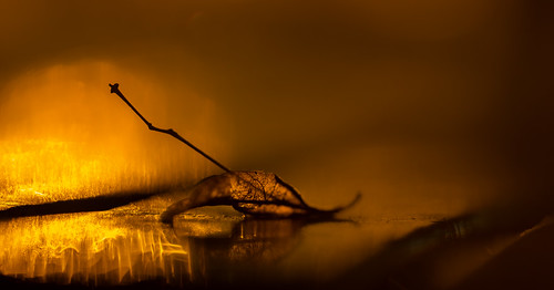 Fire Water | by J_Q_H