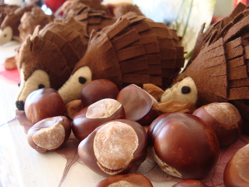 Hedgehogs with conkers | by lilspikey