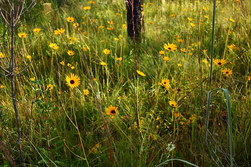 fauna flora easternnorthcarolina undisclosedlocation pinesavanna