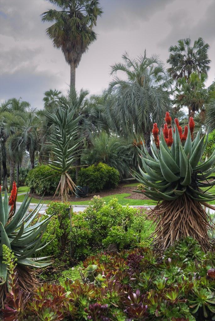 Huntington Botanical Gardens San Marino Ca James Edmondson