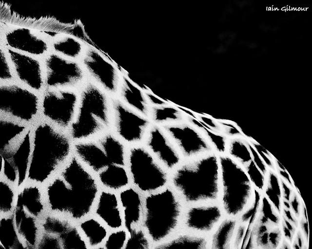 Animal textures II