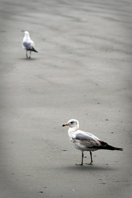 Seagulls in Boston