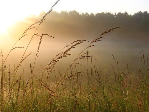 trees light sky plants green grass fog sunrise gold maine brunswick lensflare hay