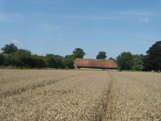 Big barn, Lenham Lenham to Charing