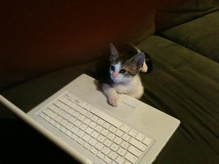 Kitteh does more data entry | by Flyinace2000
