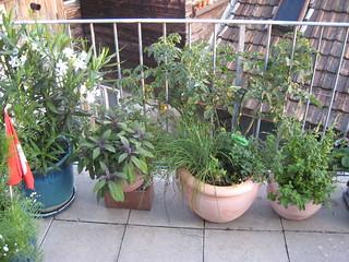 Balcony Plants   by greckor