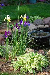 Spring by the pond | by sheryl2010