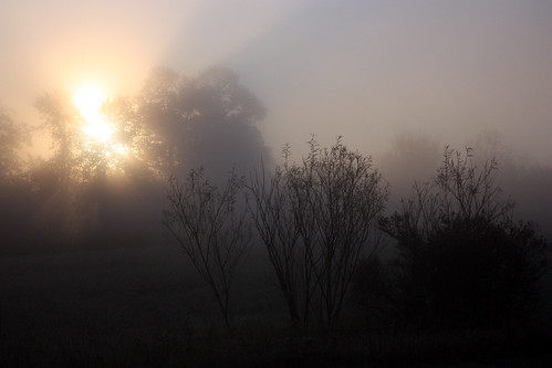 trees light sky sunrise dawn michigan silhouettes