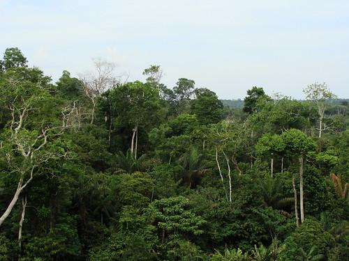 Rainforest canopy   by Ben Sutherland