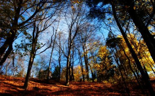 autumn newyork fall nature landscape geotagged nikon brighton corbettsglen d40x corbettsglennaturepark blm18 blmiers2