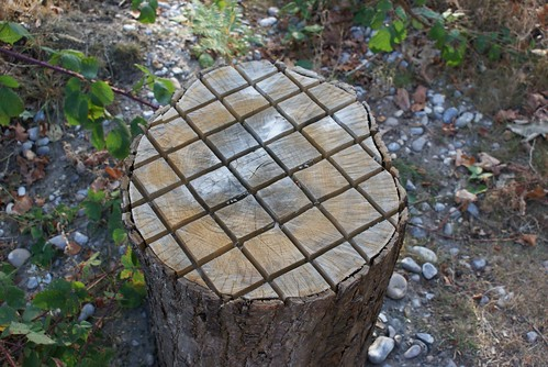 Chess Board Tree Stump? | by roleytherockstar
