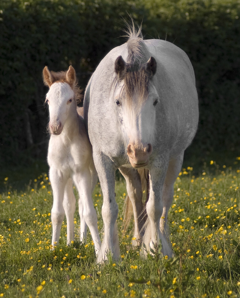Tom Price's Fields - Speckled Mare & Foal by Elizabeth Sescilla   Via Flickr: