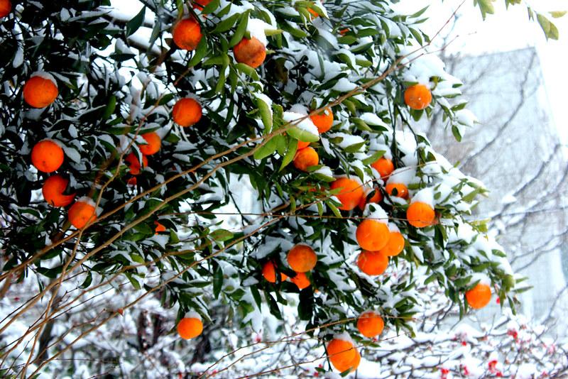 雪の鎌倉_03