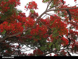 Flor de Fuego 22 Mayo 2009