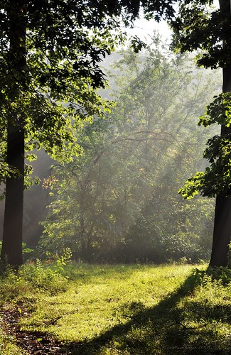morning light shadow sun mist leaves sunshine misty forest oak woods gate path fresh gateway welcome oaktree beams moisture moist followme beckoning