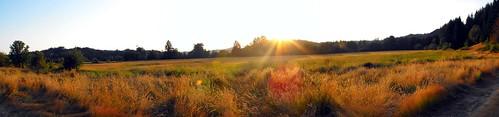 sunset field oregon farm