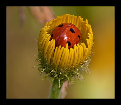 a cup of ladybug