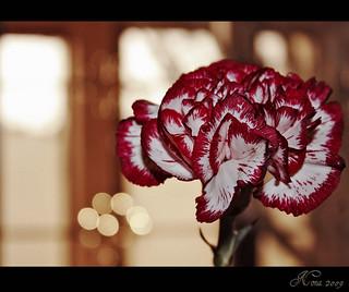 هلا باللى له الخافق يهلـي هـــــلا بــالي لـه الخافق يهل Flickr