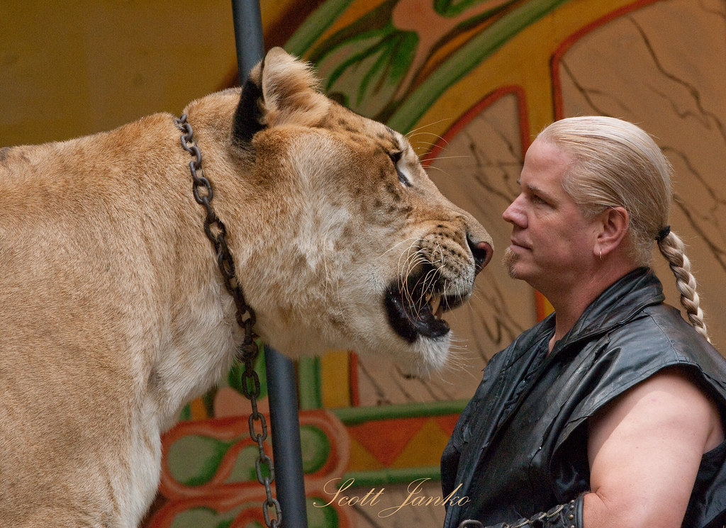 Largest cat in the WORLD The Liger at 900 pounds and 11' t
