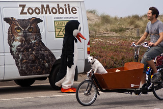 08388 Penguin meets dog | by sfbike