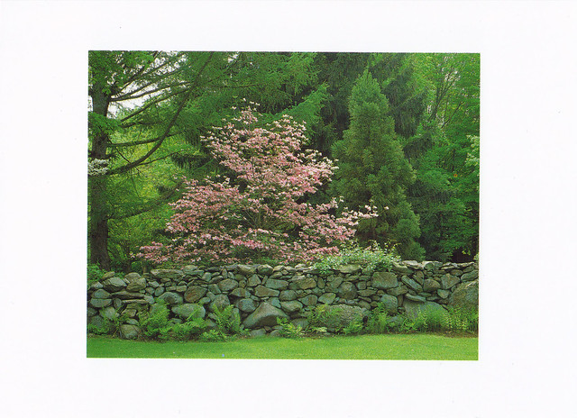 Stone Wall Fence Postcard