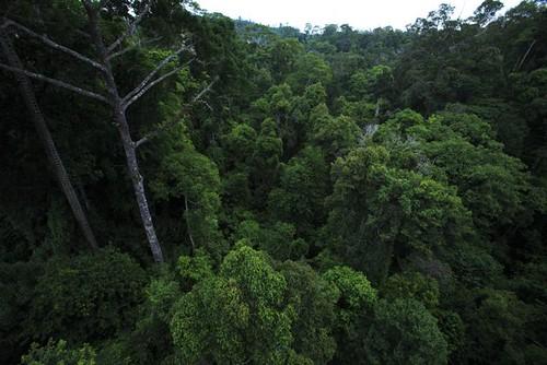 Mon, 07/30/2007 - 09:22 - Canopy. Credit: Christian Ziegler