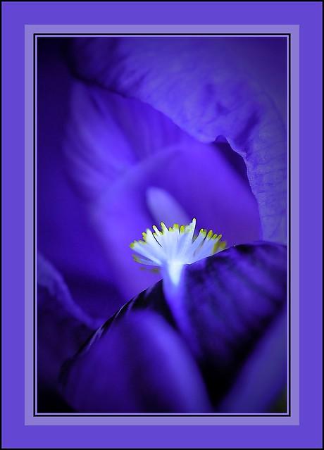 macro dans une fleur