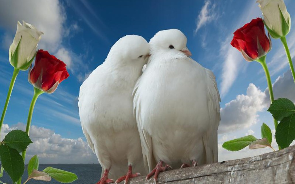 Beautiful Love Birds Wallpapers Download Love Is A Beautif Flickr