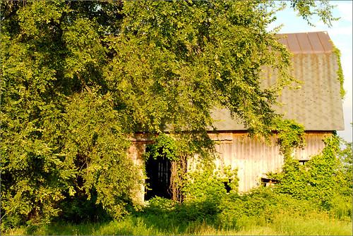 tree barn raw michigan mulliken littlevenice • joeldinda sunfield 1v1