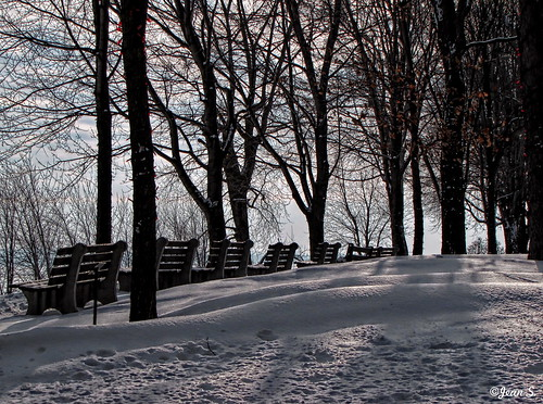 winter bench trees snow white shadow