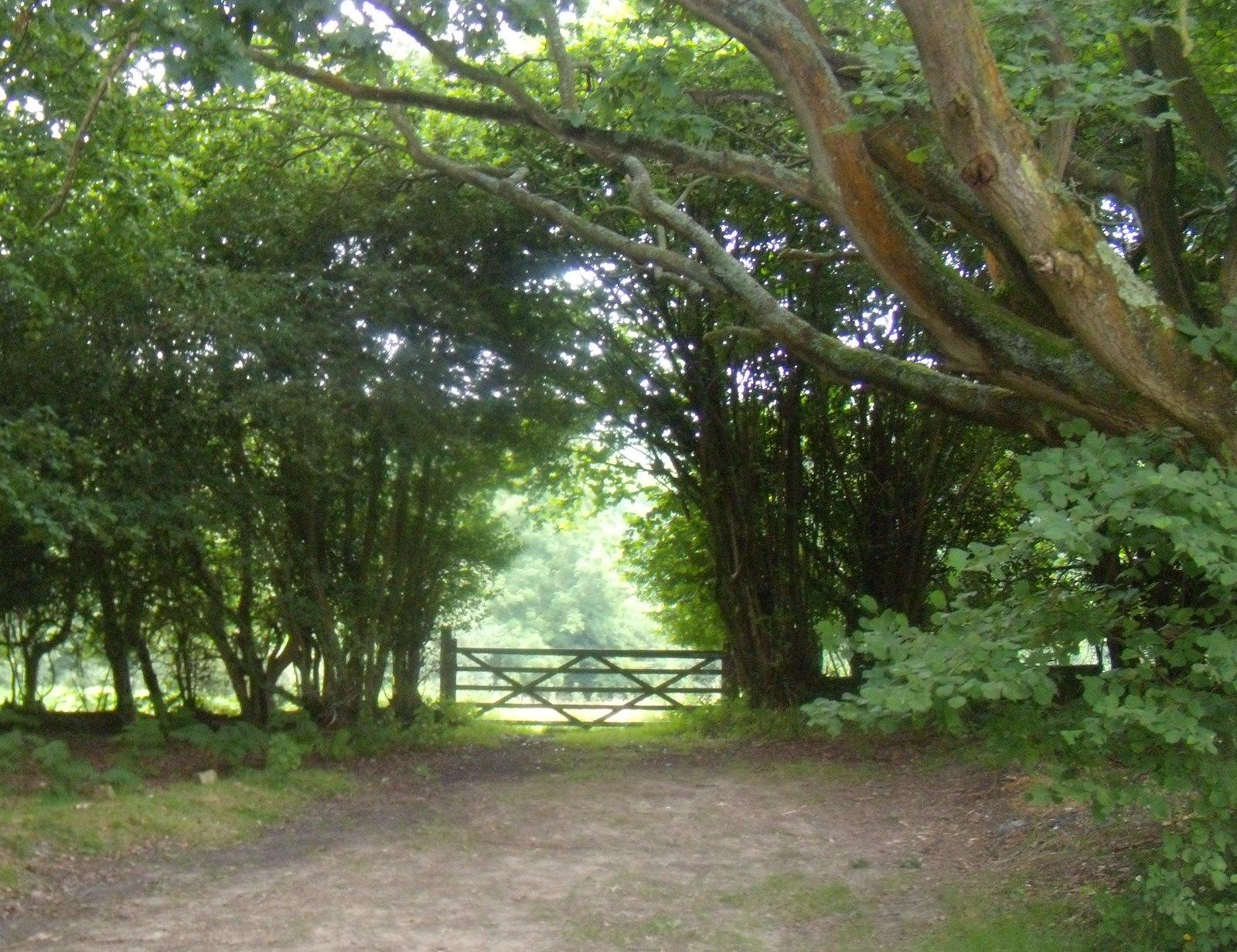 Gate Ashurst to Hartfield