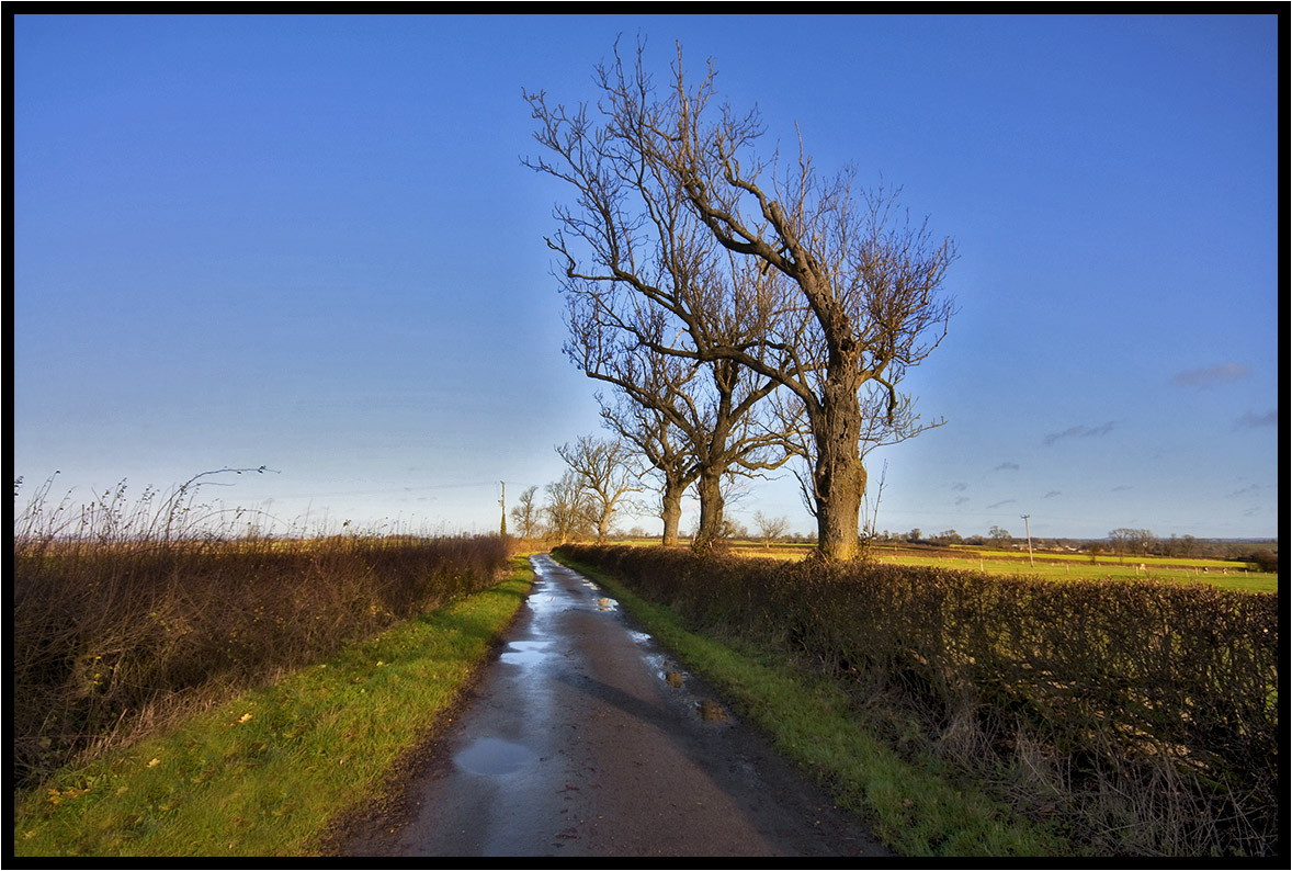 The Prevailing Wind. by Pat Dalton...