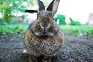 Rabbit ! / Kaninchen! | by Robobobobo