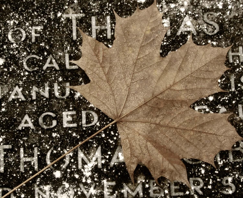 Leaf,Gravestone,grave,stone,cemetary,frozen,winter,leaves,england,uk,cheshire,brown,autumn,plant,tree,sycamore,fallen,cold,great,britain,hotpix,hotpixuk,tdk,tony,smith,tdktony,gave,yard,graveyard,RIP,dead,men,women,cemetery,sepia,black,white,mono,monochrome,b/w,graves,tomb,tombs,cemetario,muchacha,femenina,de,la,mujer,se\u00f1ora,lady,female,woman,girl,\u5973\u6027\u30e1\u30b9\u306e\u5973\u6027\u306e\u5973\u306e\u5b50,\u592b\u4eba\u5973\u6027\u5987\u5973\u5973\u5b69,fille,f\u00e9minine,femme,dame