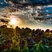 Vegetable Sunset